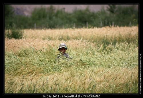 JOUR 17 : 13 AOUT 2012 : PISHU - HANUMIL