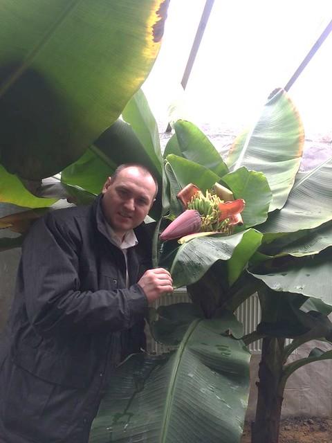 Рівненський депутат вдома вирощує банани, апельсини, лайм і кавові дерева