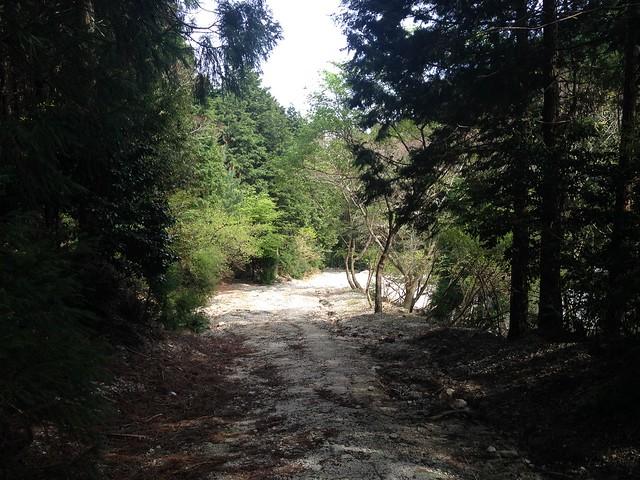 三池岳 林道