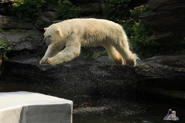 Tierpark Berlin 09.05.2015  33