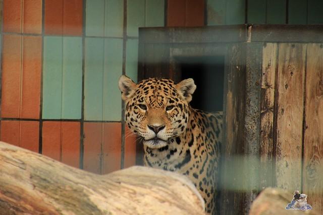 Tierpark Berlin 10.05.2015  18