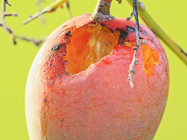 Mango 20150526