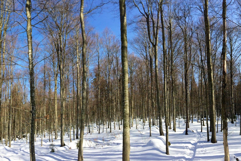 Bukový lesík na Hraničníku