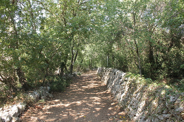 bosco romanazzi
