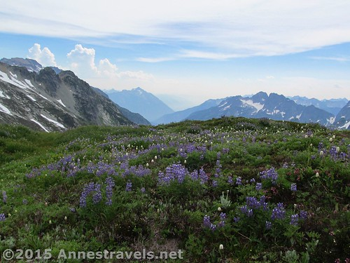 Wildflowers and mountain peaks from Sahale Arm, North Cascades National Park, Washington