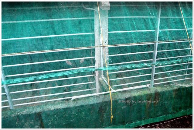 宜蘭礁溪美食-水鹿咖啡觀光牧場親子012-DSC_2085