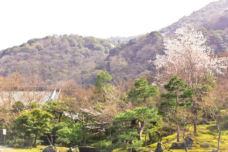 arashiyama, bamboo, bamboo mat, black, black dress, blossom, buddhism, buddhist, flowers, garden, geisha, hanami, Japan, joy, kimono, kyoto, sakura, shrine, temple, tenryuji