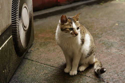 シネマ食堂街 猫