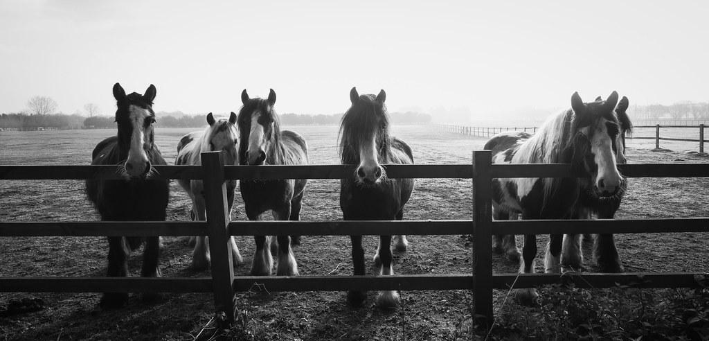 Inquisitive Horses / Horsford Woods 24/04/15