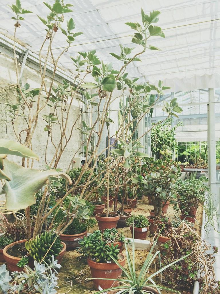 cactus et succulentes - Serre l'orangerie de Tarbes