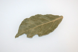 12 - Zutat Lorbeerblatt / Ingredient bay leaf