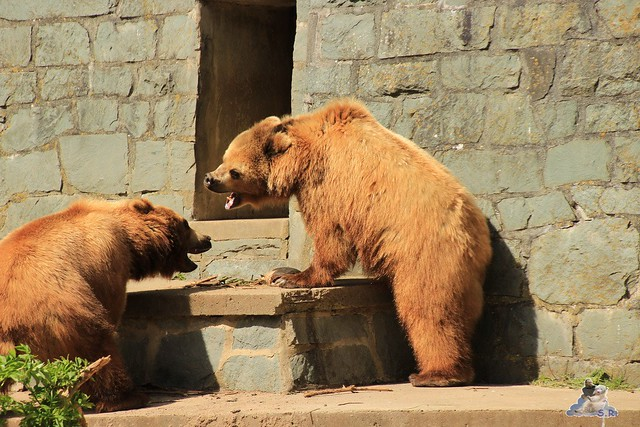 Eisbär Fiete im Zoo Rostock 23.05.2015 88