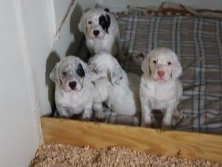 Rayne Jesse Pups 5 Wks Old_3102