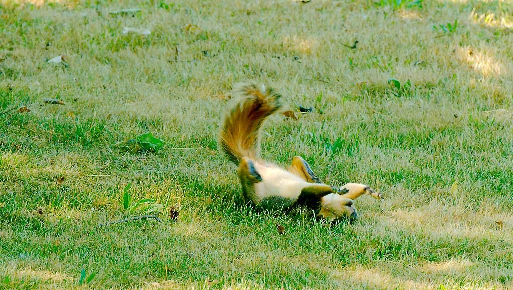 Squirrel_11