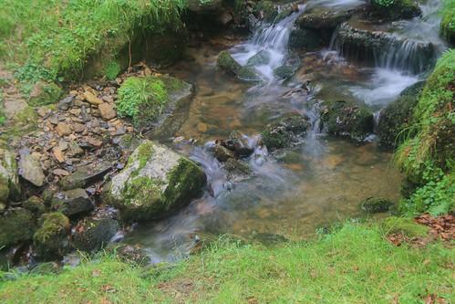 Parque Natural de #Gorbeia #DePaseoConLarri #Flickr - -919