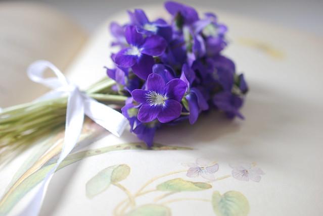 Violet Tussie-Mussies