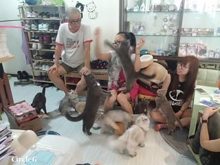 CIRCLEG CAT CAFE 貓貓地 香港 旺角 COOKING HEYHEY (16)