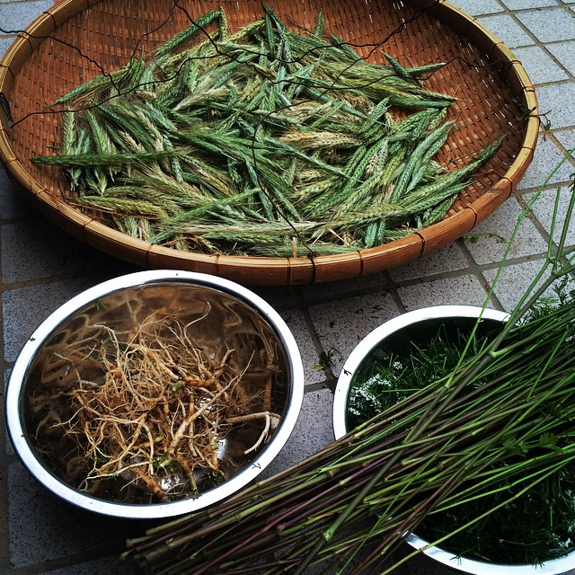 雨降り始めるので、ライ麦を刈り取って、コリアンダーを一部引っこ抜いてきた。 明日、梅雨入りかなー。