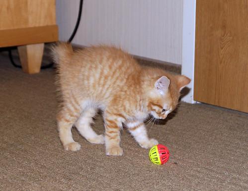 blogpaws-kittensC01649