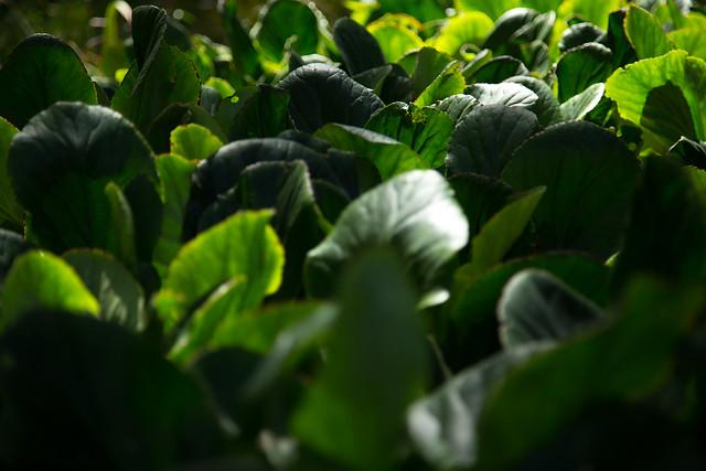 Garden - Leafy Crowd