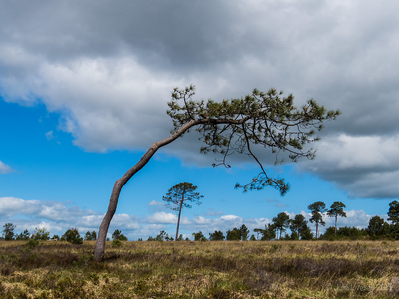 Heath, Trees and sky