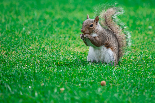 squirrel and nut | by evgeny3d