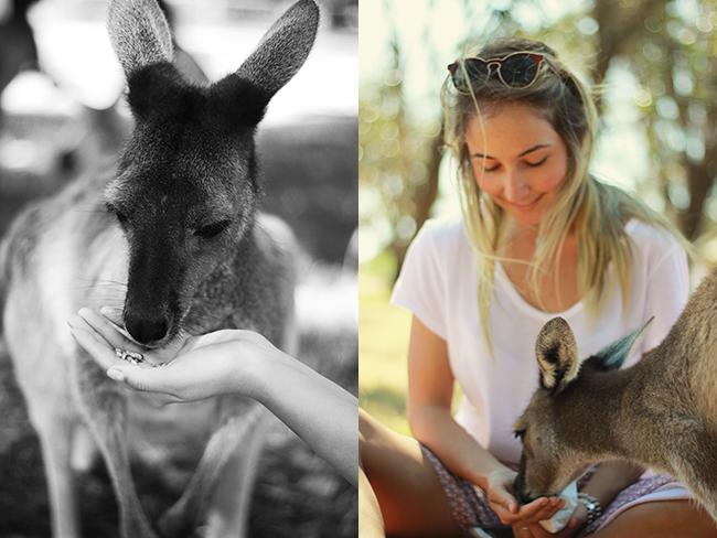 kangaroomargs