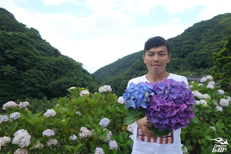 陽明山竹子湖繡球花19