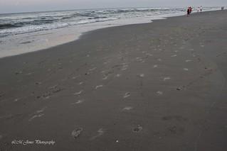 2015-06-06 Myrtle Beach Dawn_0076a