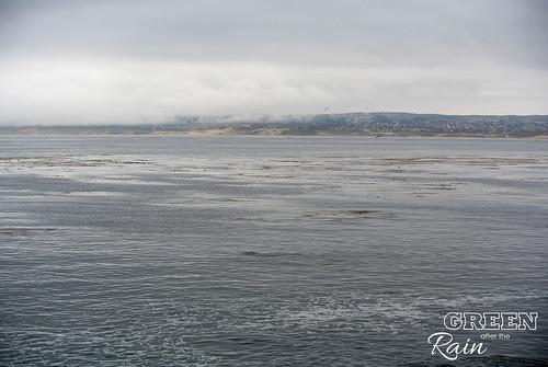 160703f Monterey Bay Aquarium _058