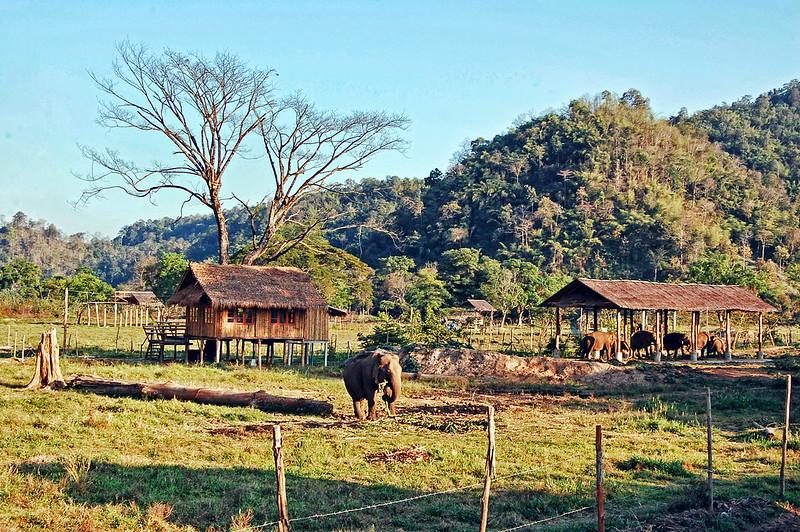 Elephant Corral