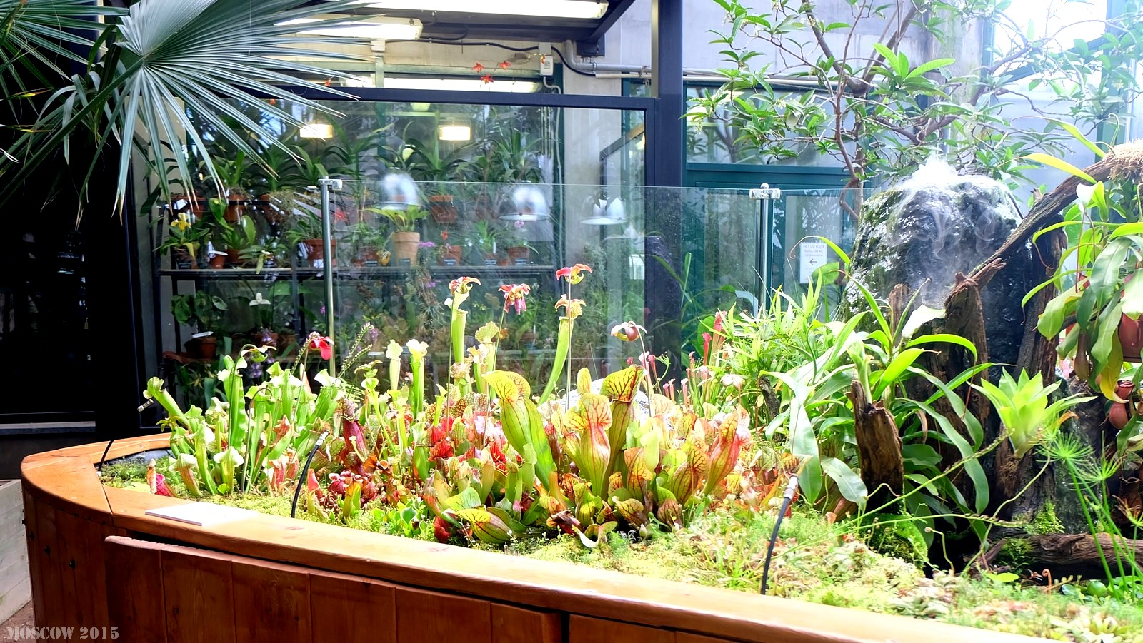 Ботанический сад МГУ «Аптекарский огород», Москва