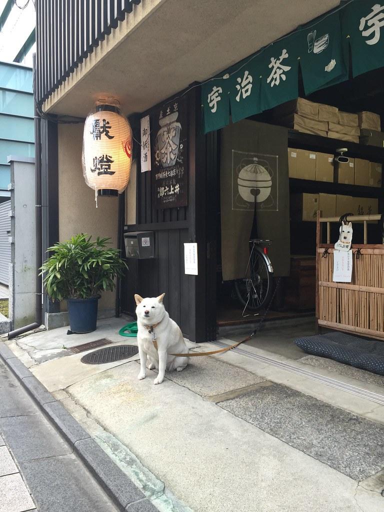 京都駅前旅館街老犬シロ?