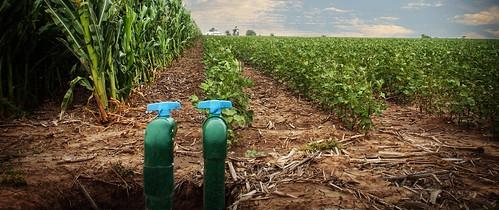 Micro-subsurface drip irrigation