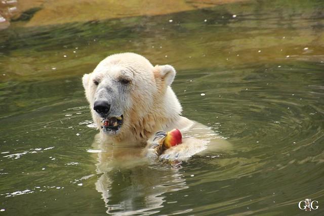 Besuch Tierpark Friedrichsfelde 20.07.201633