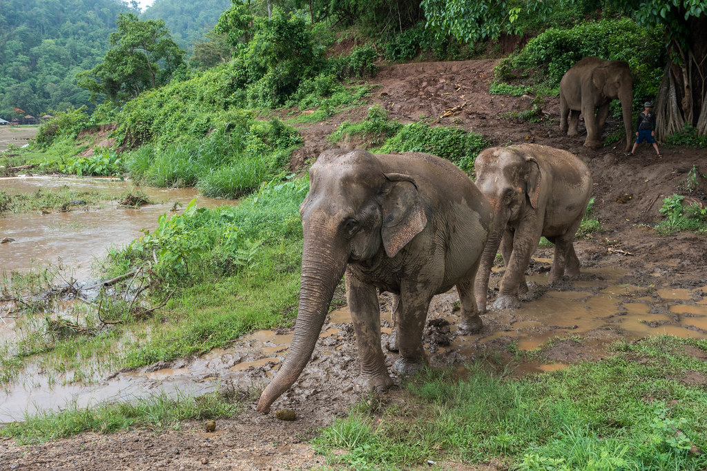 Care for Elephants-01471-2