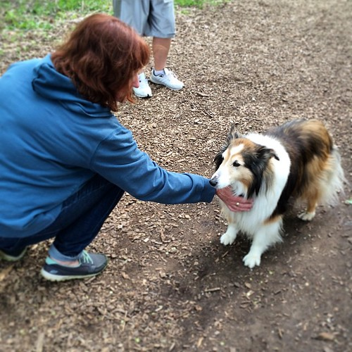 It took a year, but Cupcake now approaches Kellie for pets. #sheltie #dogpark