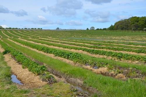 Brocksbushes Farm Northumberland May 15 4