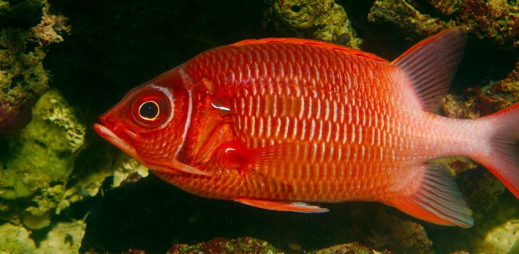 Fish_39