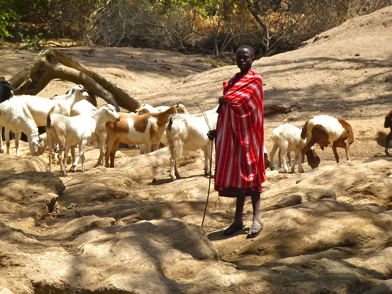 Pastoralist land rights