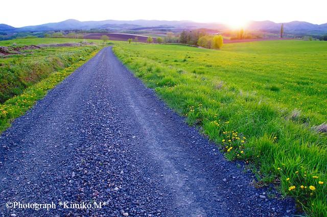 蒲公英の路