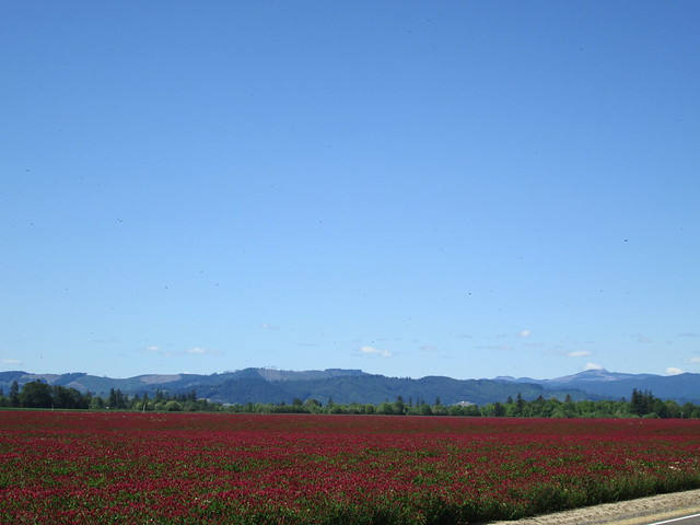 Clover field and Coast Range foothills