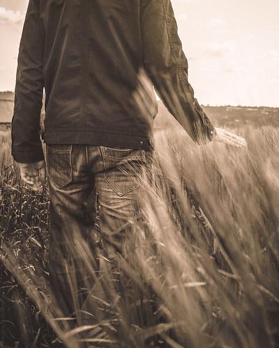 In the wheat field // 09 06 15