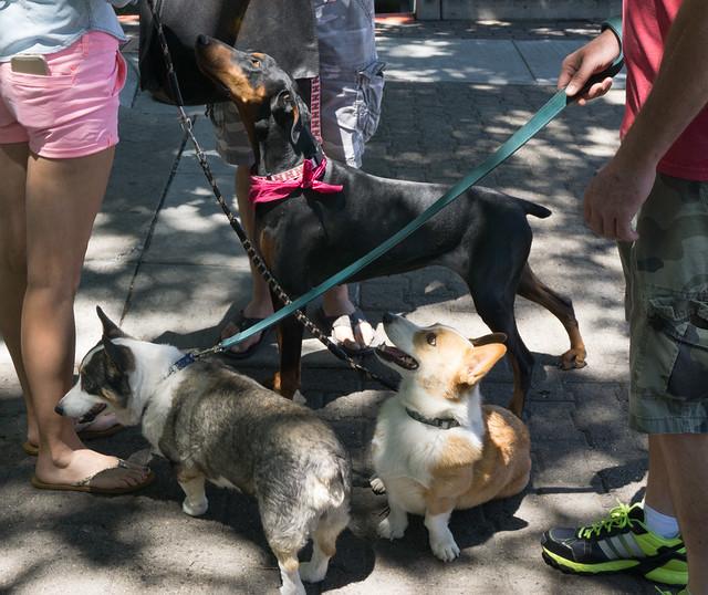 3 Dogs Enjoying Woof Down Lunch 2015