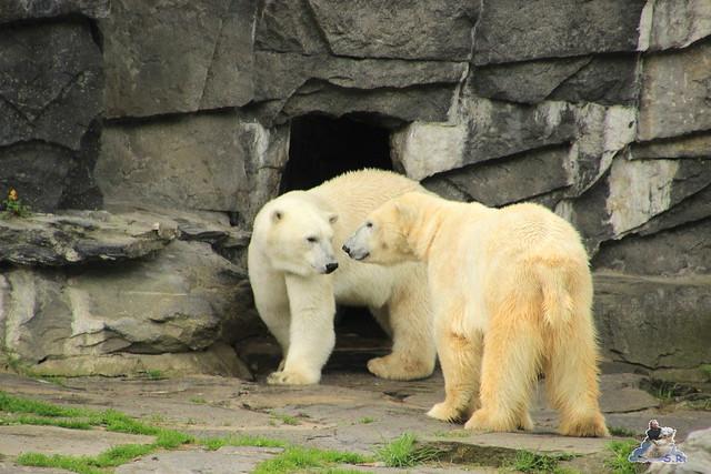 Tierpark Berlin 17.05.2015 188
