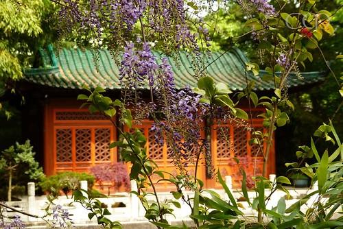 The beautiful chinese garden!