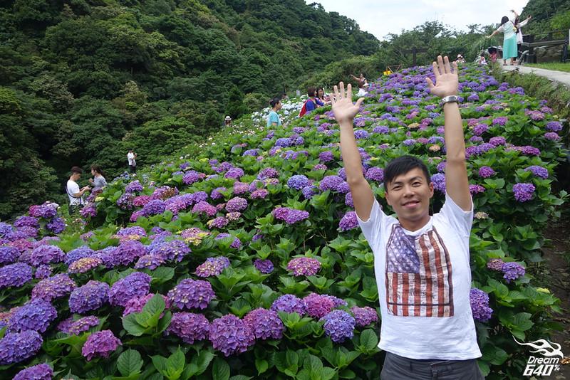 陽明山竹子湖繡球花16