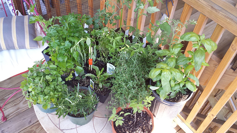 All the herbs. And tomatoes.