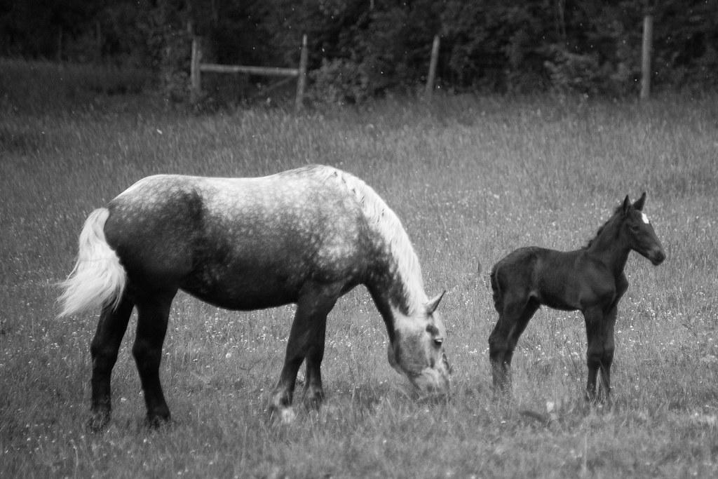 Carriage Hill Farm 2015-8520