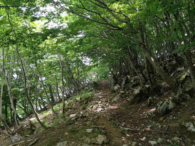 霊仙山 横道登山道